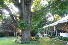 wedding arbor etsy trees yes earth friendly picks for your wedding the