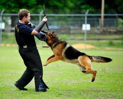 Animal Trainers Salary For The Executive With Everything A 230 000 Dog To Protect It