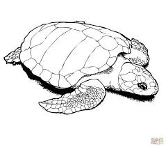 coloring pages turtles coloring pages turtle printable kids