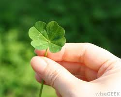 how do i find a four leaf clover with pictures