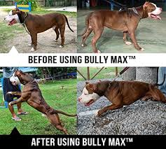 american pitbull terrier in india buy bully max inc dog muscle supplement 60 tablets online at low