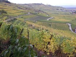 alsace wine wikipedia