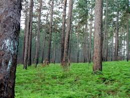 Texas forest images Tourism city of hemphill texas JPG