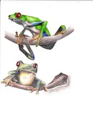 frog tattoo ideas by jainism1492 on deviantart