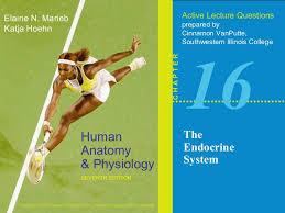 Anatomy And Physiology Chemistry Quiz 16 Quiz