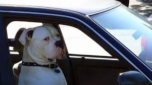 Dog In Car Meme - dont be gettin crazy dog know your meme