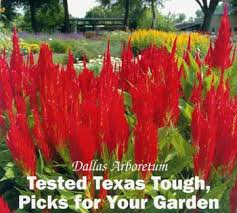 dallas arboretum tested texas tough picks for your garden