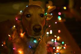 dog christmas lights christmas lights decoration