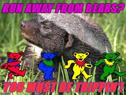 Honey Badger Meme Generator - honey badger don t give a trip imgflip