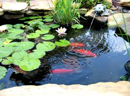 Diy Backyard Ponds Fish Pond Small Water Gardens Ponds And Outdoor Decorations 2017