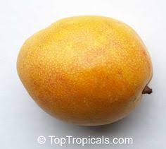 pouteria campechiana canistel eggfruit chesa click to see full