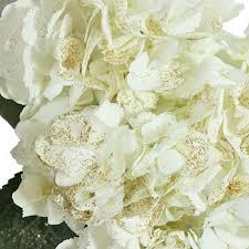 White Hydrangeas Flecked White Hydrangea