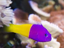 types of aquarium fish saltwater