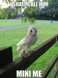 White Owl Meme - big owl little owl memebinge com white owl i shall call meme