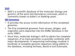 bioinformatics bioinformatics is the application of statistics