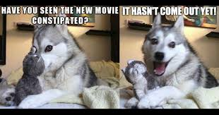 Pun Husky Meme - best of the bad pun dog meme 18 pics weknowmemes