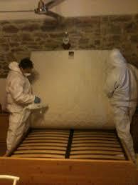 cimici da materasso cdp branca infestazione da cimice dei materassi grosseto