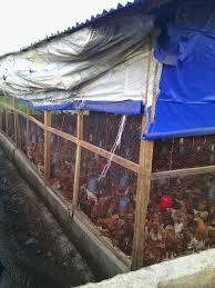 House Design Pictures In Nigeria by Niheria Poultry House Design With Pictures Of Poultry Pen House