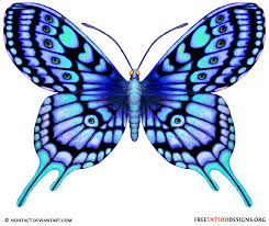 collection of 25 blue butterfly with flower on stomach