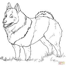schipperke coloring page free printable coloring pages