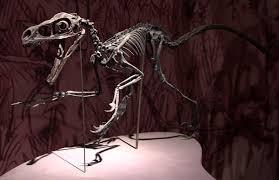 Fossil Machine 3 Hand Date Bambiraptor Wikipedia