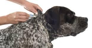 cuccie per cani tutte le offerte cascare a fagiolo antipulci per cani i migliori sul mercato greenstyle