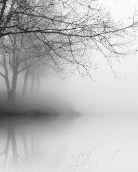 best 25 black and white tree ideas on black tree