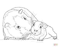 guinea pig painting colouring pages throughout coloring pages pigs