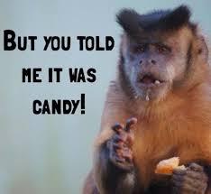 Baby Monkey Meme - nice 51 best monkeys friends images on pinterest wallpaper