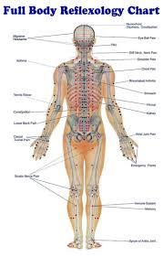 human body points in the body organ anatomy