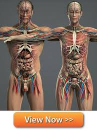 Best Anatomy And Physiology Textbook Online College Anatomy And Physiology Course At Best Anatomy Learn