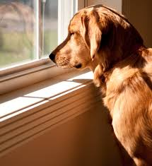 Dog Peed On Bed What To Do If Your Dog Pees Or Poops Indoors Dog Trainer