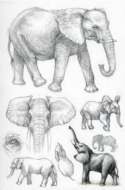 115 best elephants images on pinterest elephant sketch