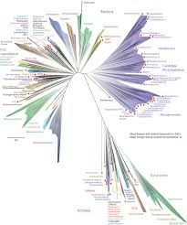 a new view of the tree of life nature microbiology
