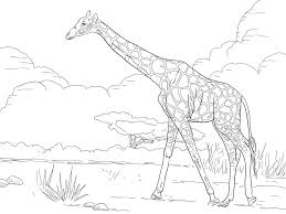 giraffe forage on land field coloring pages for kids dbz