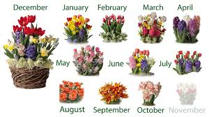 twelve months of pre planted flower bulb gift gardens sku 50431