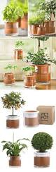 Self Water Pot Gardening On Pinterest Planters Container Garden And Self Watering