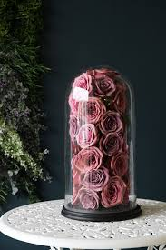 rose in glass pink roses in glass dome