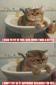Mean Cat Memes - mean kitty memes image memes at relatably com