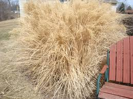cutting ornamental grass and other clean up my