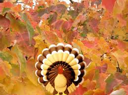 download thanksgiving wallpaper turkey wallpapers free group 69