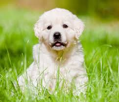 How To Care For Your by Puppy Care Basics How To Care For A New Puppy Caring For A New