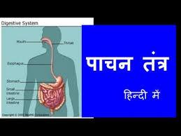 Anatomy Of Human Body Pdf Human Digestive System In Hindi Urdu ह न द For Children