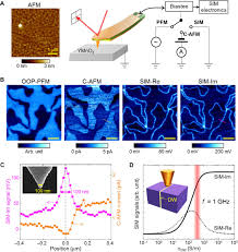 low energy structural dynamics of ferroelectric domain walls in