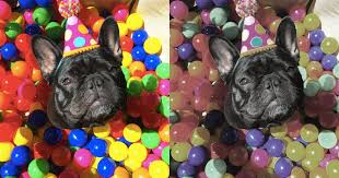 Are All Dogs Colour Blind Are Dogs Really Color Blind The Dodo