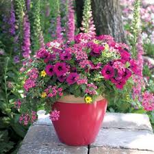 Flowering Patio Plants 18 Best Flower Plants For Patio Table Images On Pinterest Flower