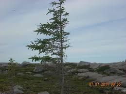 one sided trees lessthan3ley