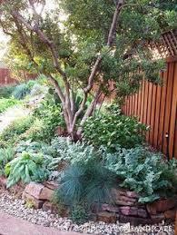 Landscaping Backyard Ideas Best 25 Texas Landscaping Ideas On Pinterest Texas Gardens