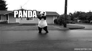 Funny Panda Memes - panda memes best collection of funny panda pictures
