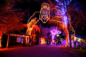 phoenix zoo lights tickets the holiday events across the valley that you must not miss